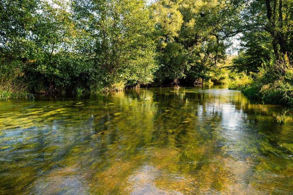 Рыба распределяется по всей акватории и держится в основном на течении