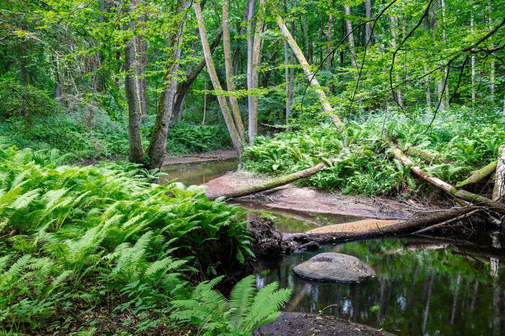 Крупная форель прячется в завалах из деревьев или в корнях у подмытых берегов