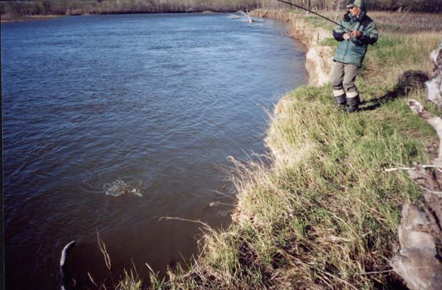 Та самая первая весенняя жереховая рыбалка
