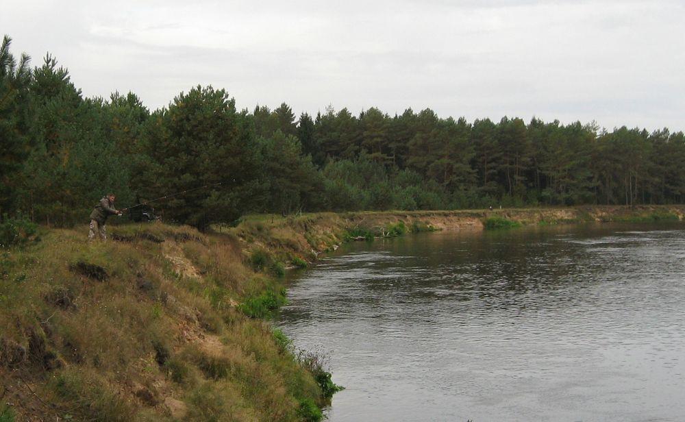 Хороши точки под обрывистыми берегами, где течение вымывает ямы