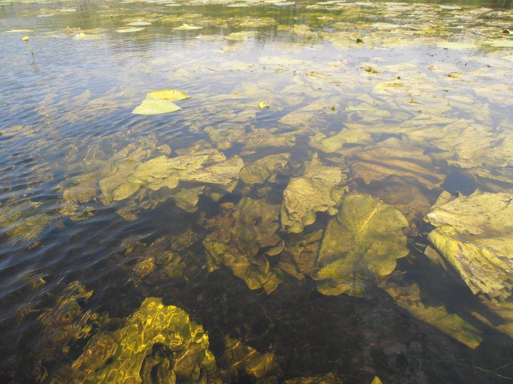 Мало кого прельстит тупик старого русла реки с глубиной по колено, да еще и порядочно заросший