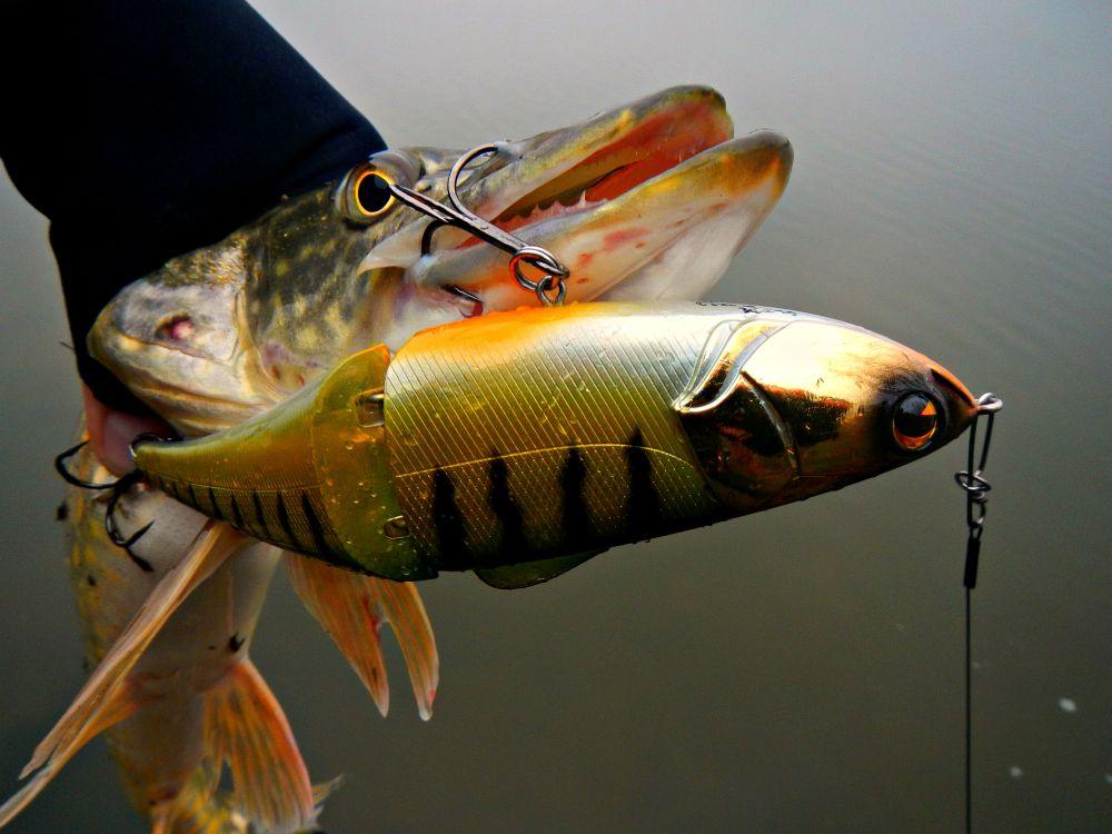 При силовом вываживании даже среднего размера рыбины поводок и застежка испытывают поистине чудовищные нагрузки