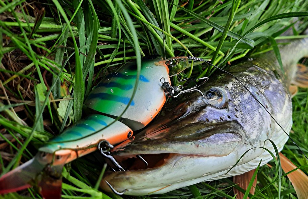 Медленно тонущий Hira Crank Gill S-Bill 140 - спец по вымучиванию пассивной щуки