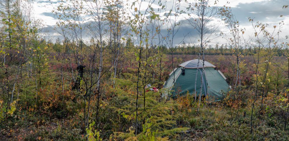Игорь нашёл-таки в мари сухой пятачок для лагеря