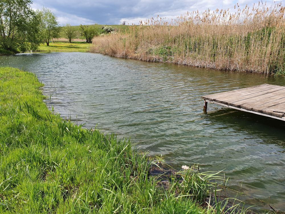С таких мостков удобнее всего облавливать пруд
