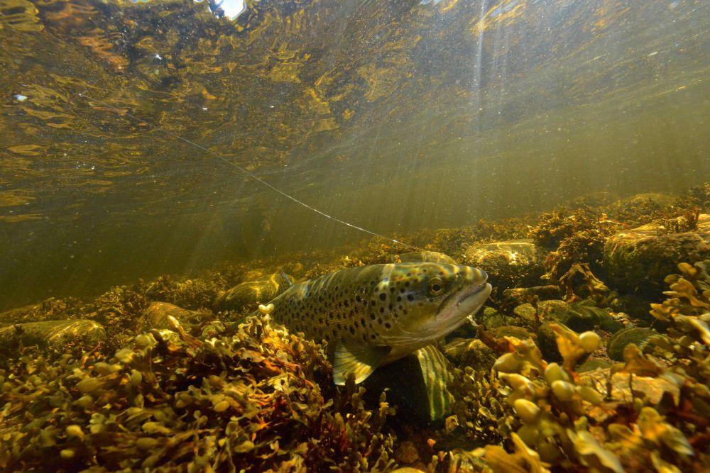 В приливной зоне дно реки зарастает морскими водорослями