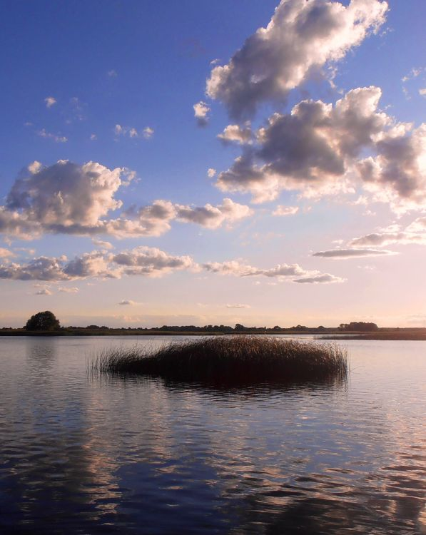 Возле островков растительности среди мелководья часто дежурит крупный окунь