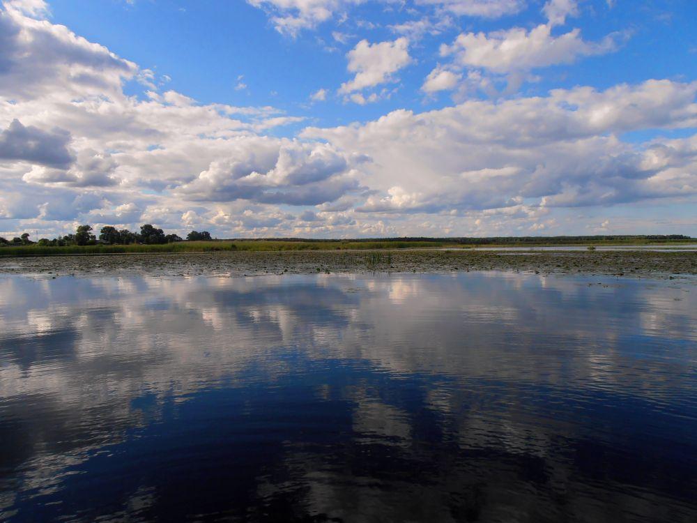 Верховья Киевского моря с обширными многокилометровыми меляками изобилуют щукой и окунем