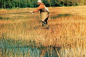 Динамичная ловля красноперки