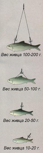 005-3.jpg