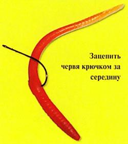 006-5.jpg