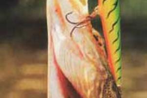 Преднерестовая ловля щуки в искусственных каналах