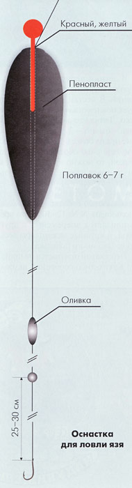010-2.jpg