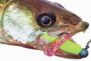 Зрение пресноводных рыб